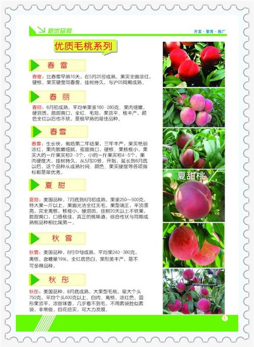 陕西渭南30公分毛桃苗品种介绍